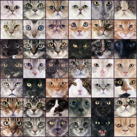 gruppo di gatti