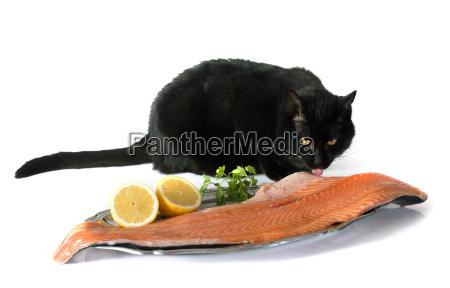 pesce nero trota salmone nutriente alimentazione