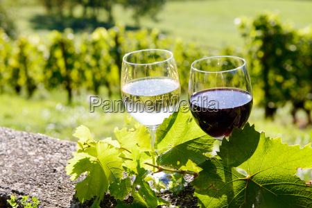 bicchiere cibo foglia bere giardino agricoltura