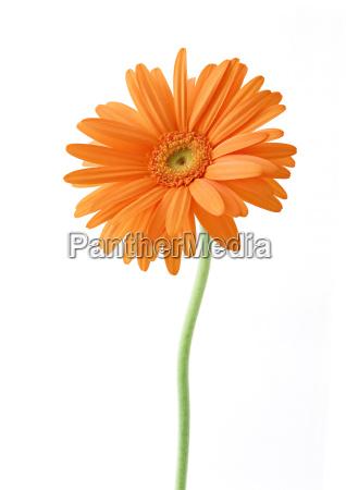oggetto singolo rilasciato fiore pianta flora