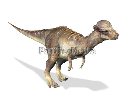animale rettile animali corno illustrazione dinosauro