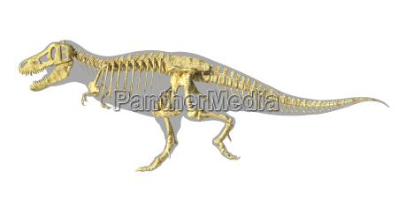 t rex dinosauro foto realistico scheletro