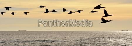 volo alba atlantico acqua salata mare