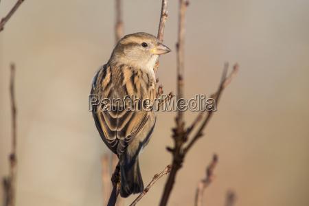 uccello fauna uccelli creatura passero uccello