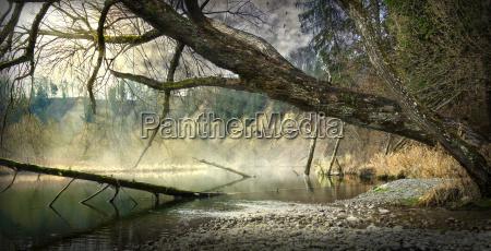 albero uccello nebbia uccelli fantasia riflesso