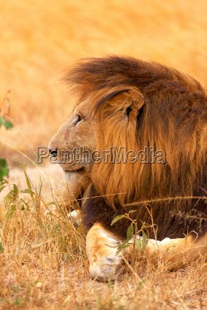 andare enorme esistere vivere animale mammifero