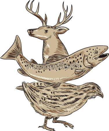 deer trout quail drawing