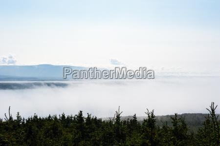 bassa nebbia tra gli alberi e