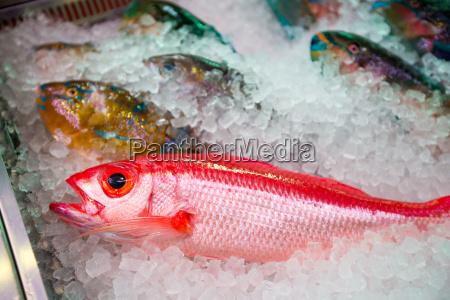 blu asia pesce occhi esotico sushi