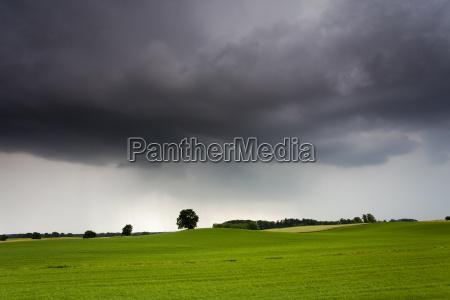 campo di grano con le tempeste