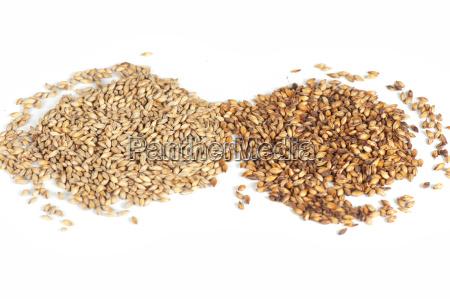 malt, grains, on, white - 15887549