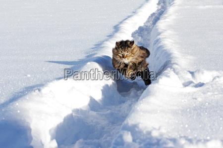 inverno saltare balzare saltellare salta salto