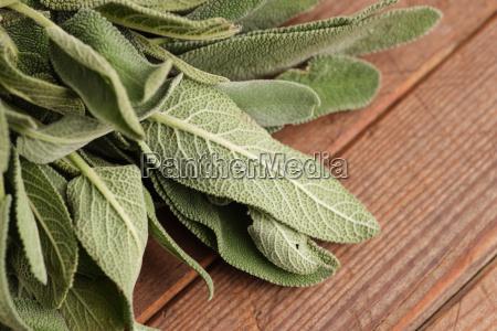 cibo foglia spezia rilasciato forte foglie