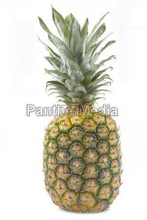 maturo frutta uno ananas bianco completo