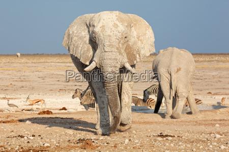 enorme ambiente parco animale mammifero fauna