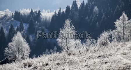 hoarfrost coperto paesaggio invernale