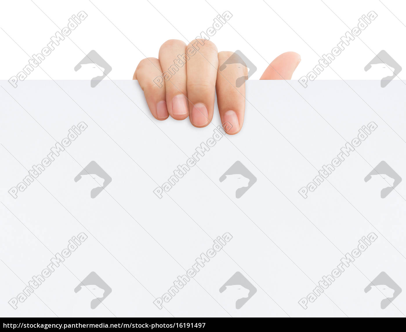 hand, holding, blank, paper, banner, isolated - 16191497