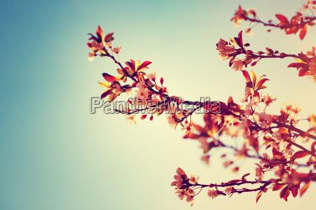 bella fioritura albero di frontiera