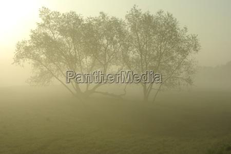 albero alberi nebbia suggestivo di atmosfera