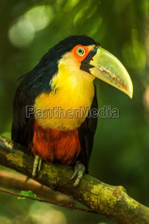albero alberi animale uccello verde legno