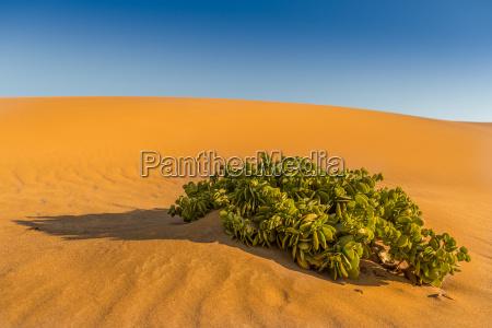 blu deserto verde namibia secco asciutto