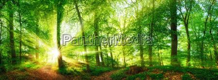 panorama della foresta con i raggi