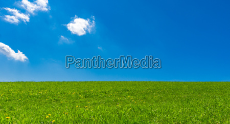 blu agricoltura luce soleggiato estate cielo