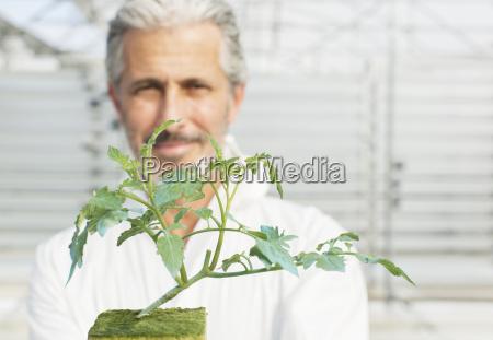 futuro agricoltura botanica orizzontale vista frontale