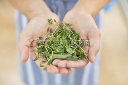 mani in possesso di mazzo di
