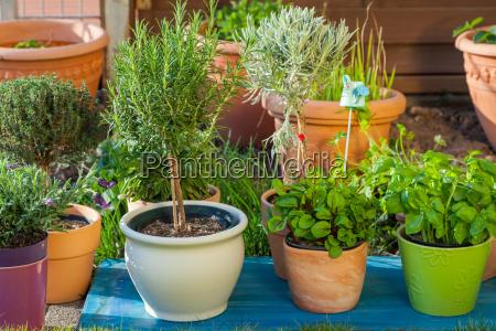 giardino fiore pianta fiori giardinaggio prato