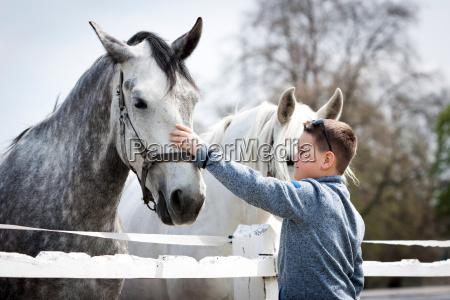 cavallo animale cavalli pascolo mandria amare
