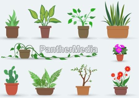 fiore pianta flora fioriera mondo vegetale