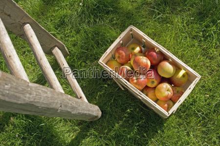 agricolo giardino agricoltura vendemmia freschezza baviera