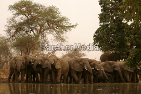 bere animale mammifero elefante sera ristoro