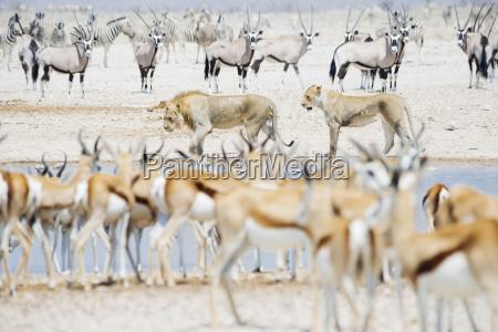 viaggio viaggiare animale mammifero parco nazionale