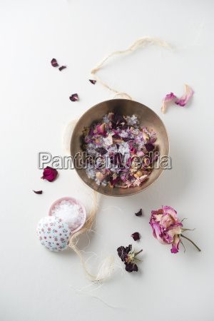 natura morta fiore pianta rosa fioritura