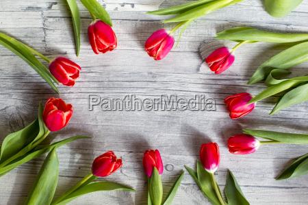 tulipani su legno