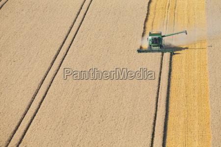 combine harvester harvesting wheat in rural