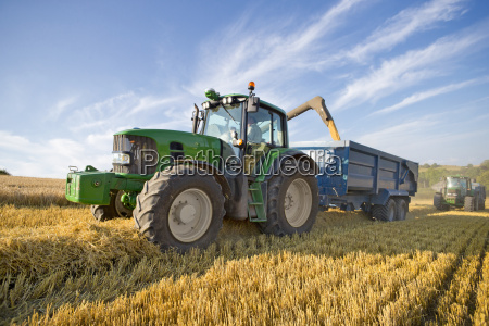 combine harvester harvesting wheat into trailer