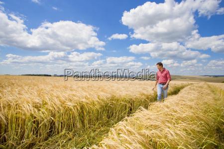 farmer examining sunny rural barley crop