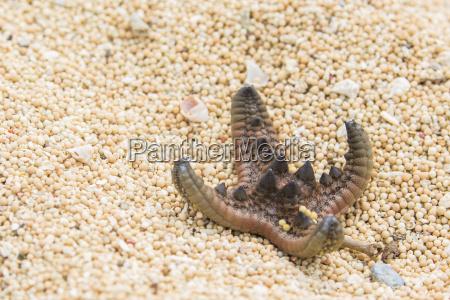 animale indonesia pesce orizzontale allaperto natura