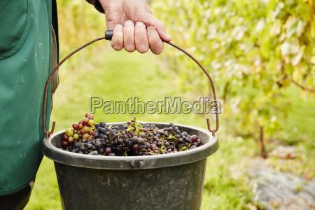 cibo orizzontale vigneto frutta allaperto inghilterra