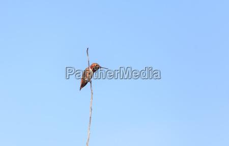 uccello penne piume natura colibri rosso