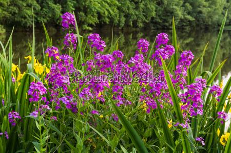 fiore pianta
