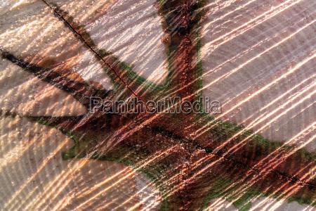 legno tronco astratto nucleo kernel modello