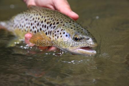 primo piano animale marrone pesce pesca