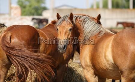 cibo amicizia bello bella cavallo animale