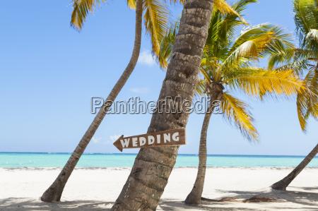 rebublic dominicana spiaggia tropicale con palme