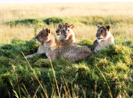 viaggio viaggiare animale mammifero africa kenia