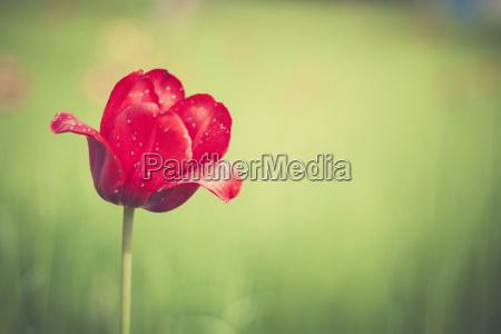 fiore pianta freschezza primavera germania allaperto